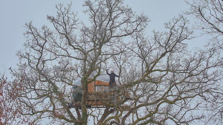 Des occupants du Bois Lejuc s'étaient installés dans des arbres (photo janvier 2017).