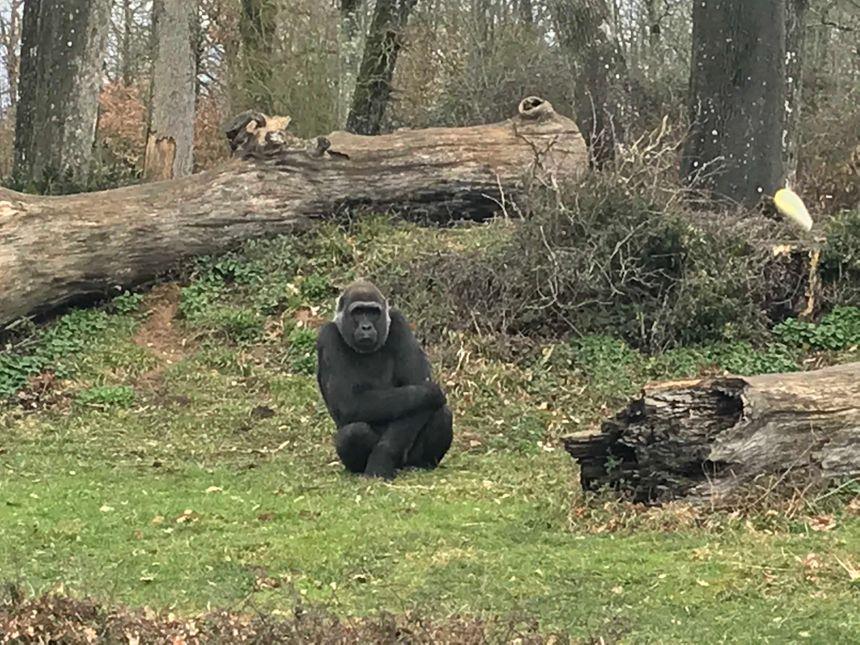 Les singes font comprendre à Pierre qu'ils ont froid.