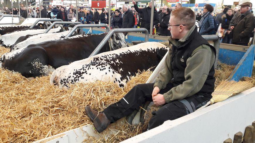Jérémy Wehrey et les vaches vosgiennes, au Salon de l'agriculture à Paris, le 27 février 2018