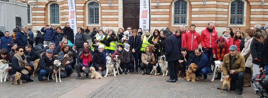 85 chiens se sont baladés dans les rues du centre-ville toulousain