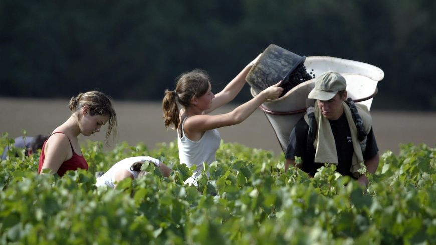 Des élèves de lycée agricole (photo d'illustration).