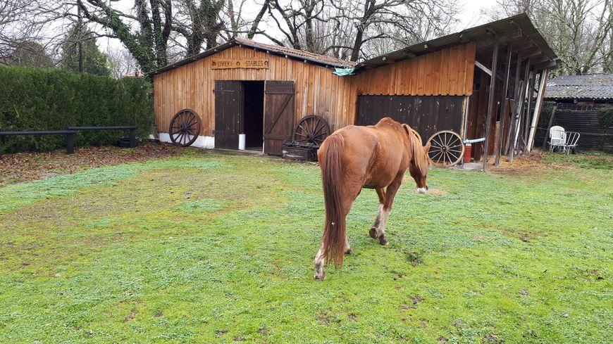 Le ranch Amadeus à Saint-Paul en Born