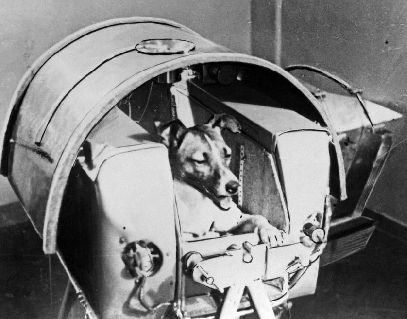 Laïka à bord du Sputnik II (13/11/1957)