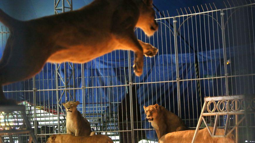 Le maire de La Riche reconnait qu'il n'était pas particulièrement sensible à la question de la présence des animaux dans les cirques, mais l'idée a fait son chemin