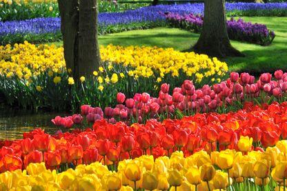 Tulipes, jacinthes et narcisses colorées dans les jardins de Keukenhof au printemps, Pays-Bas, le 21 avril 2009