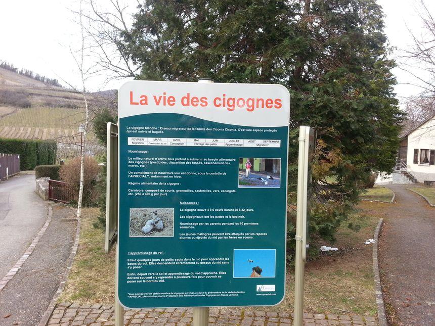 Ammerschwih est village-cigogne