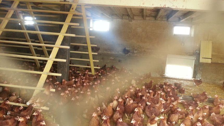 L'un des bâtiments où vivent les poules de Ludovic Chénier. Elles rentrent et sortent comme elles veulent. On est loin de l'élevage de batterie.