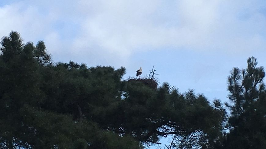 La cigogne vous accueille depuis son nid à la réserve ornithologique du Teich