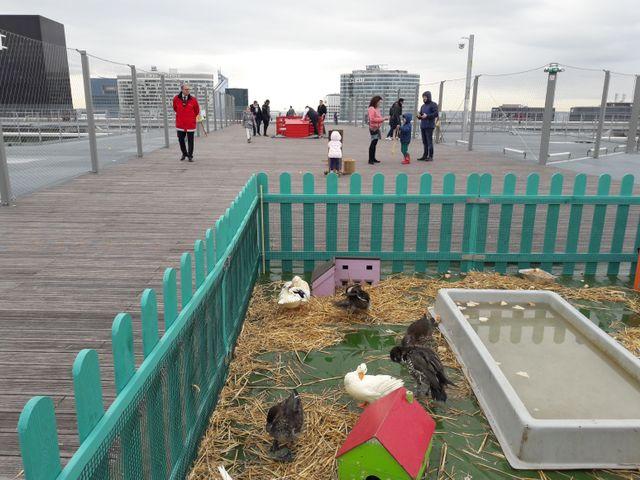La Grande Arche de la Défense accueille des animaux de la ferme pour Pâques