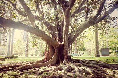 Les racines ont changé la face du monde