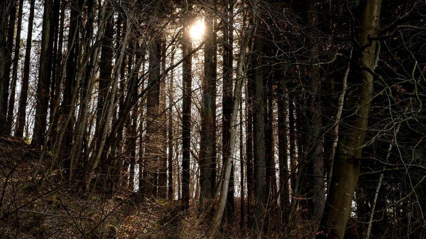 La forêt du Territoire de Belfort couvre 44% de la surface du département