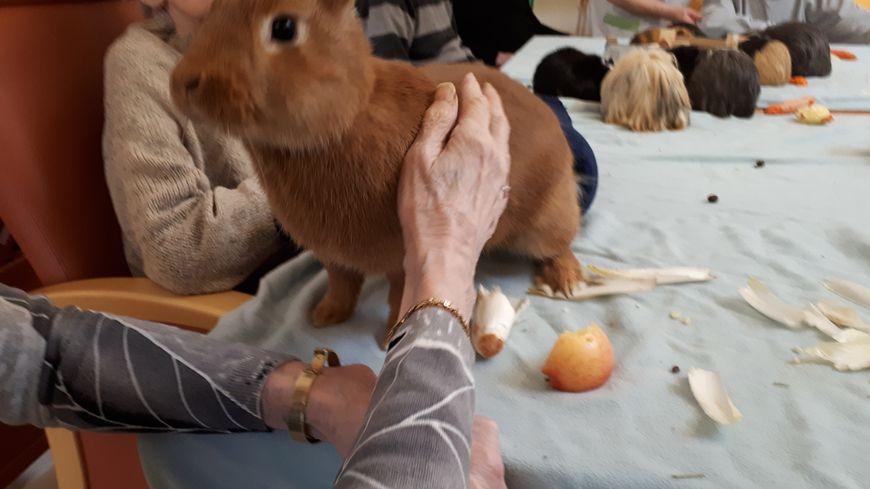 Les animaux passent l'après-midi sur une table au milieu des résidents.