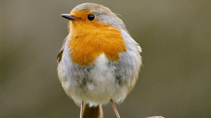 Dans le Loiret aussi, les oiseaux des campagnes disparaissent massivement.