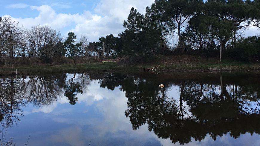 Les paysages naturels de la réserve ornithologique du Teich