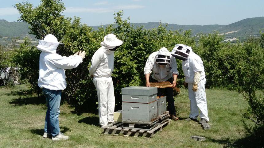 Installation des ruches connectées.