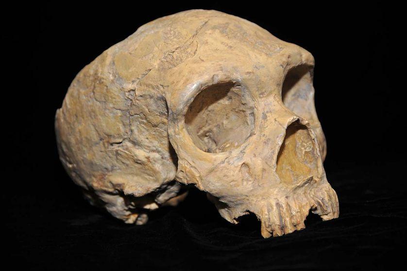Crâne néandertalien découvert dans la carrière de Forbes en 1848