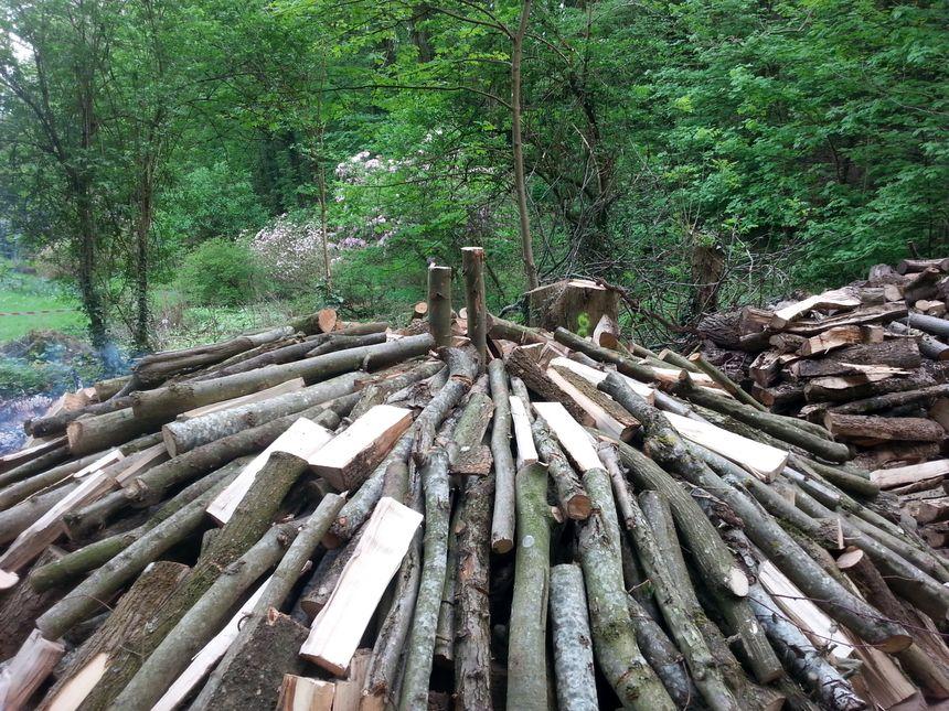 Les huit stères de bois devraient produire près de 500 kg de charbon en fin de semaine