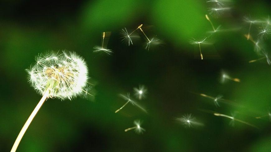 La plupart des pollens sont en forte progression sur le territoire.