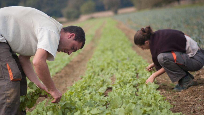 Les Terres Cultivees En Bio Ont Augmente De 10 En Un An En Dordogne