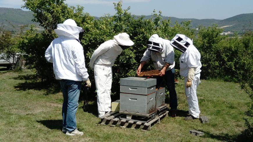 Après avoir installé les balances connectées, l'apiculteur et les techniciens inspectent la ruche.