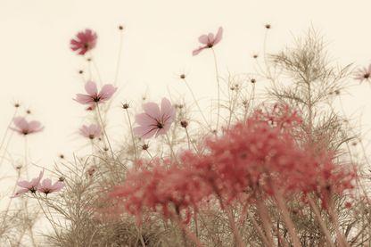 Fleurs d'automne, en septembre à Nagasaki