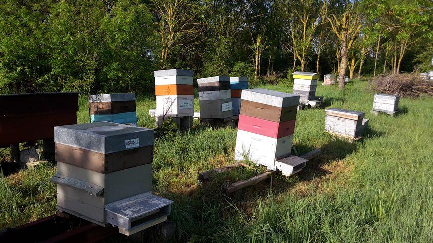 Les ruches de Sébastien Giraudet