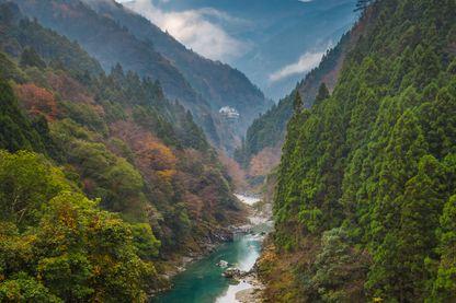 """La rivière Iya dans la forêt de Tokushima au Japon. Cet endroit a inspiré à Miyazaki la forêt luxuriante et mystérieuse de """"Princess Mononoké"""""""