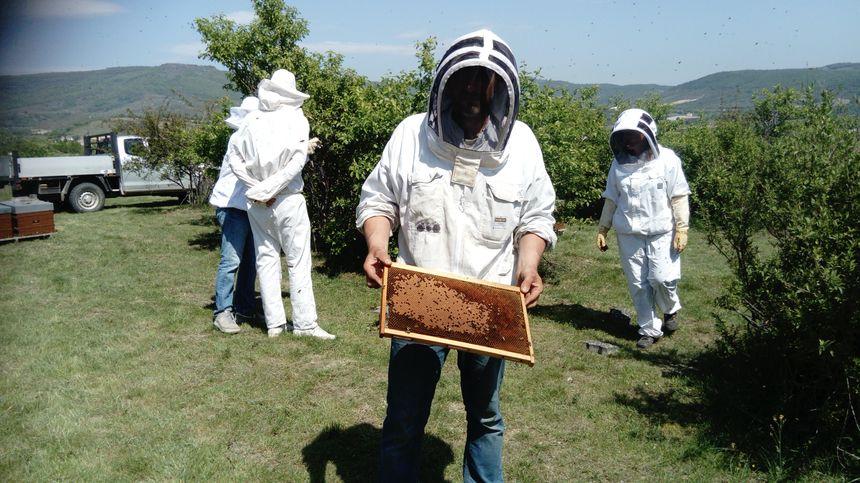 L'apiculteur présente un cadre de couvains. Certaines alvéoles contiennent des larves, d'autres du nectar et du pollen.