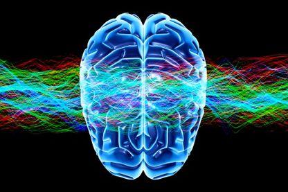 Connaissez-vous le cerveau ?