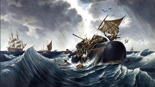 La baleine : fragile héritage