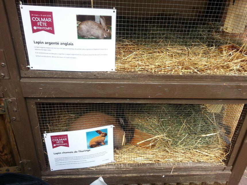 Les lapins sont là pour Pâques !