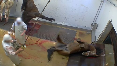 Homme/Animal : une frontière fragile ? (3/4) : Le bien-être animal est-il compatible avec l'élevage ?