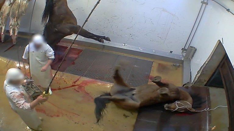 Capture d'écran d'une vidéo de l'association de défense des animaux L214 - Abattoir municipal d'Alès