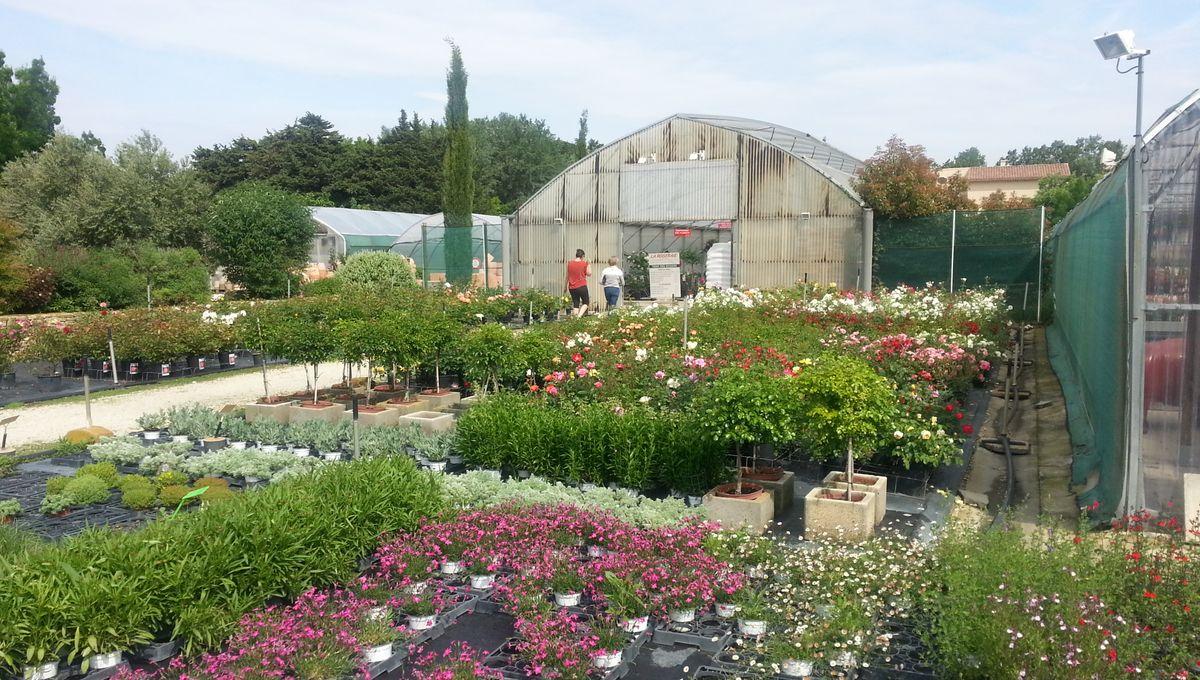 Jardinerie Pas Cher Toulouse grandes enseignes et jardineries indépendantes font carton