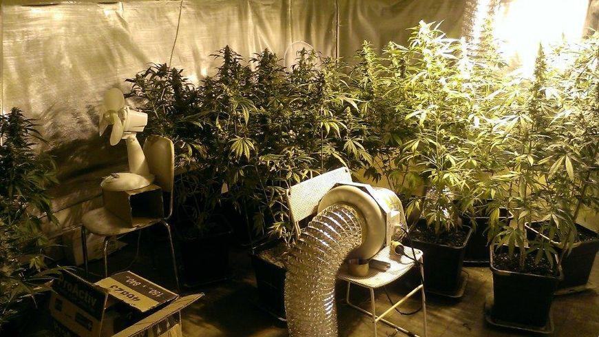 Les enquêteur ont saisi 19 plants, un pistolet 9 mm, 51 grammes d'héroïne, de la cocaïne,et du cannabis