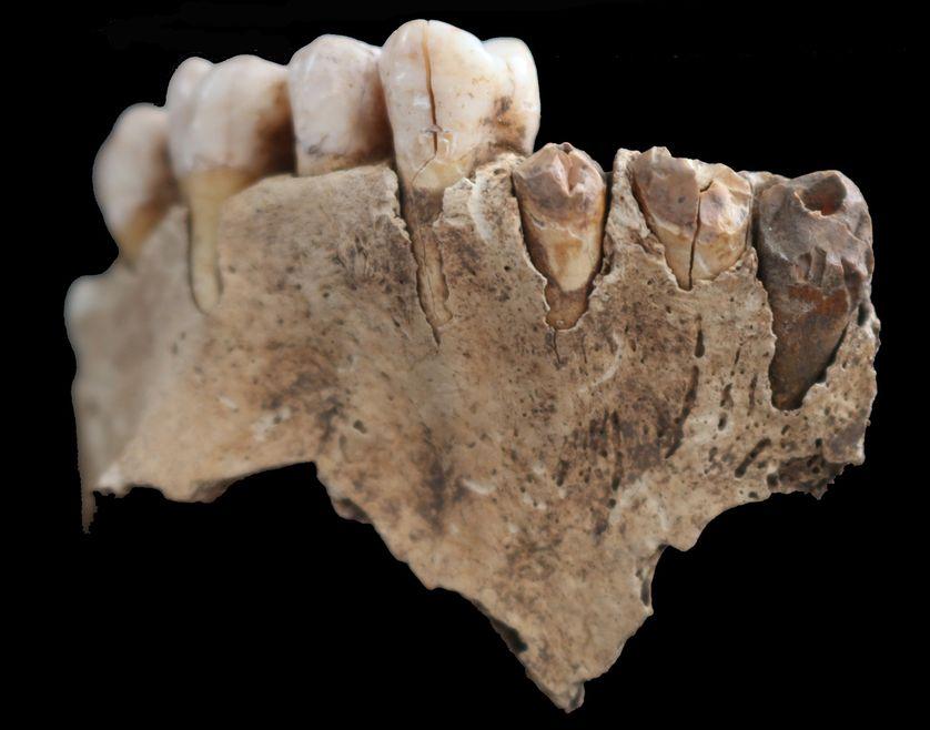 Mâchoire humaine déposée dans une cavité et portant des traces de feu sur les incisives