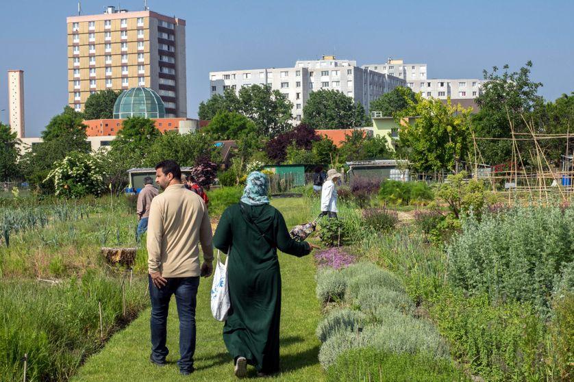 La ferme urbaine de Saint-Denis propose, outre la culture de légumes, des animations pédagogiques et des activités culturelles. Elle a ouvert le samedi 19 mai 2018