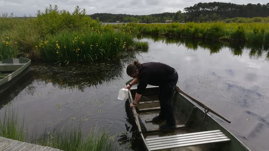 Christophe Lesbats prépare sa barque (galupe) sur l'étang Blanc