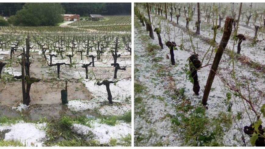 La grêle a notamment frappé les vignes des Côtes de Bourg.