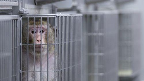 Homme/Animal : une frontière fragile ? (2/4) : Faut-il interdire l'expérimentation animale ?