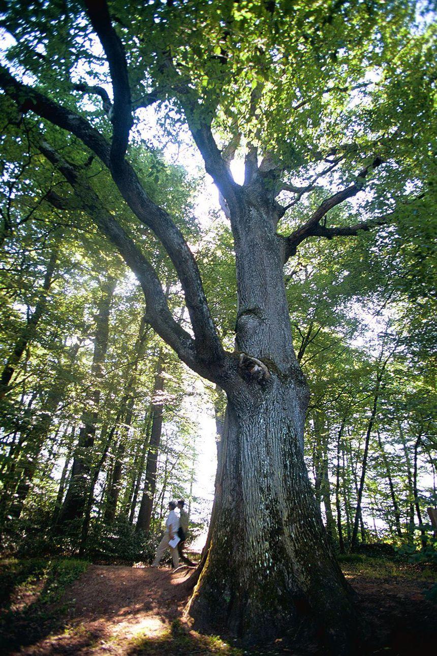 Un label rare pour la forêt de Tronçais