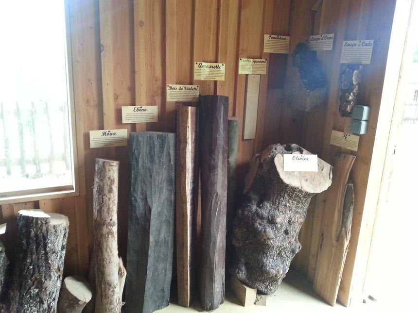 Quelques essences de bois