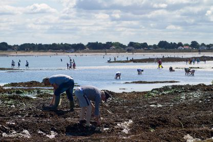Pêche de mollusques sur une plage bretonne