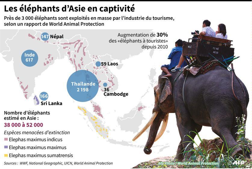 statistique du nombre d'éléphants exploités pour l'industrie du tourisme en Asie