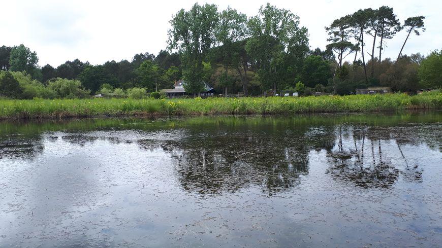 L'étang Blanc, sur 3 communes : Seignosse, Tosse et Soustons