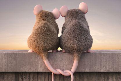 Une sérénade pour séduire : la technique de drague des souris mâles
