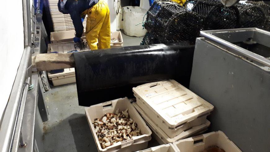 Certains fileyeurs boulonnais se sont reconvertis dans le crabe et le homard, car la sole ne rapportait plus assez.