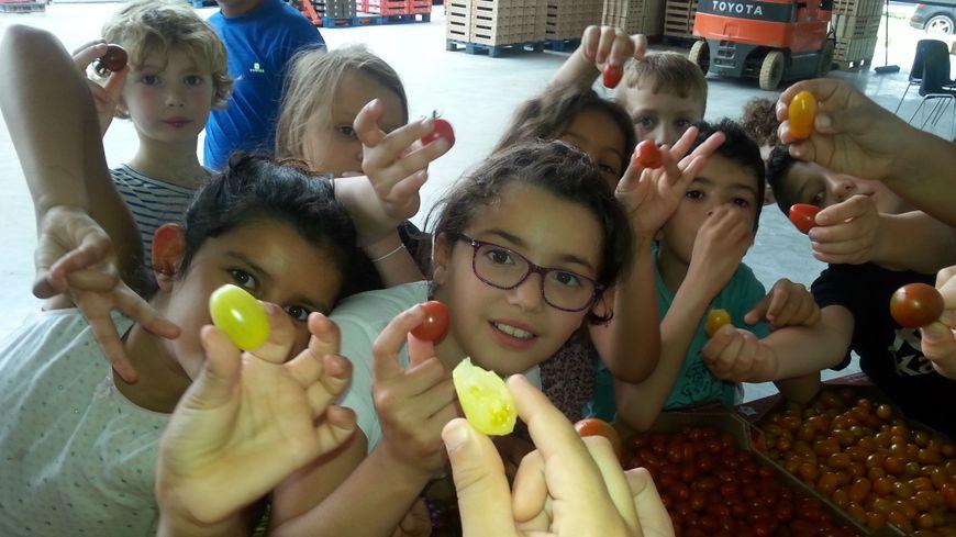 Les enfants découvrent les tomates dans la serre JPL de Montfavet