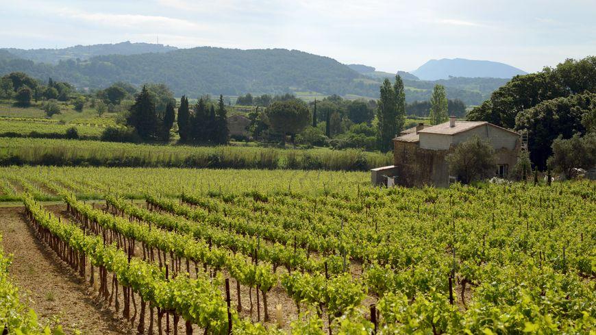 Un vignoble des Côtes du Rhône