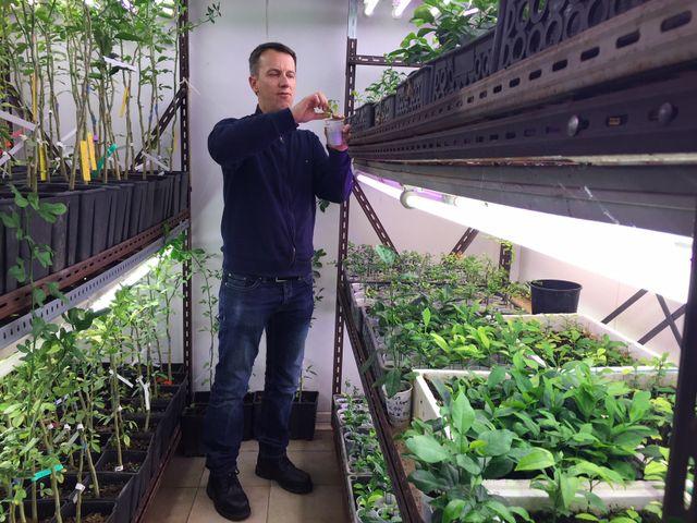 Yann Froelicher coordonne le programme de création de nouveaux agrumes Innov'Agrumes